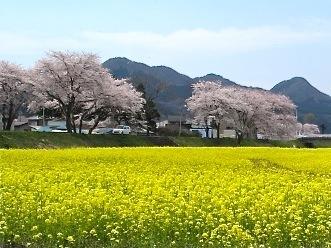 naruko_haru2.jpg